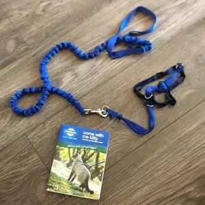 Stretchy cat leash and harness